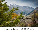 nature background of sunny pine ... | Shutterstock . vector #554231575