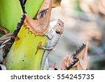 Lizard On A Palm Tree