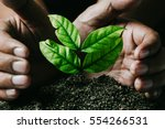 Small photo of male hands transplanting young plant growing on soil /protect nature and environment concept