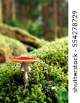 Small photo of fly amanita in profile against litter of moss