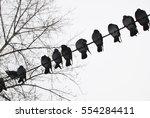 Pigeon Bird World City Birds...