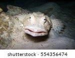 Stone Fish  Crocodile Fish