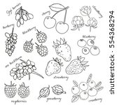 hand drawn set of  berries.... | Shutterstock .eps vector #554368294