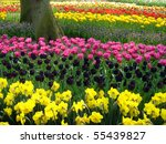 Beautiful Tulips At Keukenhof...
