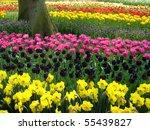 Beautiful Tulips At Keukenhof...
