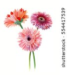 Bouquet Gerberas. Watercolor...