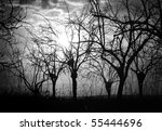 Silhouette Bare Trees And...