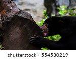 Malayan Sun Bear Or Honney Bear