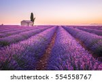valensole lavender fields ... | Shutterstock . vector #554558767