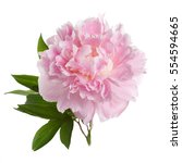 Pink Peony Flower With Leaves...