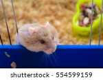 Small photo of Small hamster looking out with affecting eyes