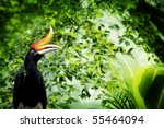borneo exoctic great hornbill... | Shutterstock . vector #55464094