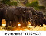 Elephants In Chobe National...