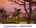 elephants in moremi national... | Shutterstock . vector #554674324