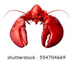 lobster front view isolated on... | Shutterstock . vector #554704669