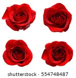 Stock photo red rose blooms 554748487