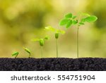 agriculture. plant seedling.... | Shutterstock . vector #554751904