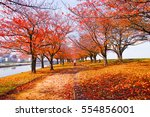 walking at the park in autumn... | Shutterstock . vector #554856001