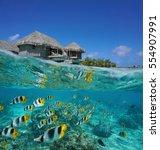 half and half  tropical... | Shutterstock . vector #554907991