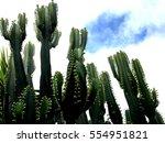 cactus      Shutterstock . vector #554951821