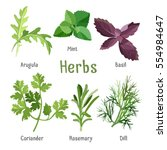 kitchen aroma herbs and spices... | Shutterstock .eps vector #554984647