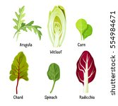 collection of different herb... | Shutterstock .eps vector #554984671