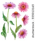 Watercolor Set Of Echinacea...