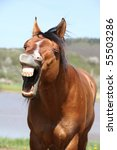 Yawning Brown Horse
