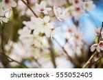 Spring Blooms Iii