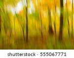 view of a woodland area using a ... | Shutterstock . vector #555067771