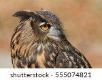 portrait image of a eurasian... | Shutterstock . vector #555074821