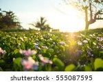 Wild Meadow Flowers On Morning...