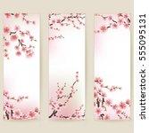 cherry blossom realistic banner.... | Shutterstock .eps vector #555095131