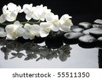 Close Up White Orchid With...
