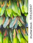 background from feathers of the ... | Shutterstock . vector #555120547