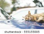 Cat Lying Down On Car Hood