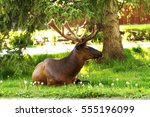 Small photo of An elk with velvet antlers sitting on the green grass in the town of Banff in Banff National Park, Alberta, Canada.