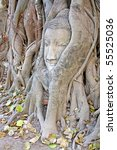 Buddha Statue Entwined By Root...