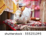 white fluffy old rabbit sitting ... | Shutterstock . vector #555251395