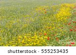 Colorful Summer Meadow With Re...