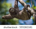 happy sloth  | Shutterstock . vector #555282181