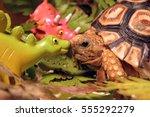 cute baby leopard tortoise kiss ...