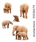 Stock photo set of baby and adult elephants isolated on a white background 55530175