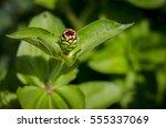 Flower Bud In A Green Garden