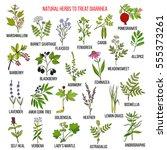 best medicinal herbs to treat... | Shutterstock .eps vector #555373261