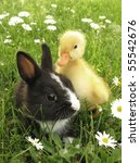Rabbit Bunny And Duckling Best...
