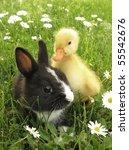 Rabbit Bunny And Duckling Best...