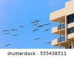 Swarm Of Pelicans Flying Aroun...