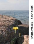 Flower Growing In A Rock...