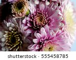 beautiful flowers background... | Shutterstock . vector #555458785